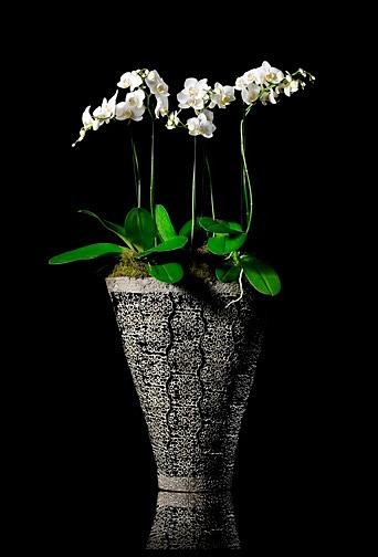 Photographies de Design floral by Benoit Leleu