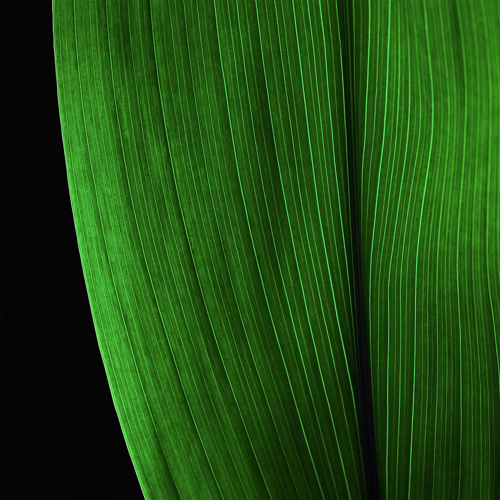 Green meditation